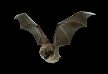 Bat-General